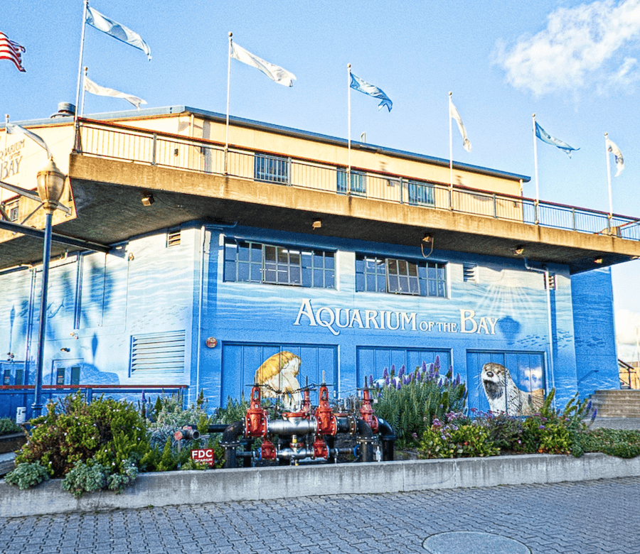 Discount Tickets to Aquarium of the Bay
