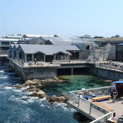 Monterey Bay Aquarium + Day Trip Tips