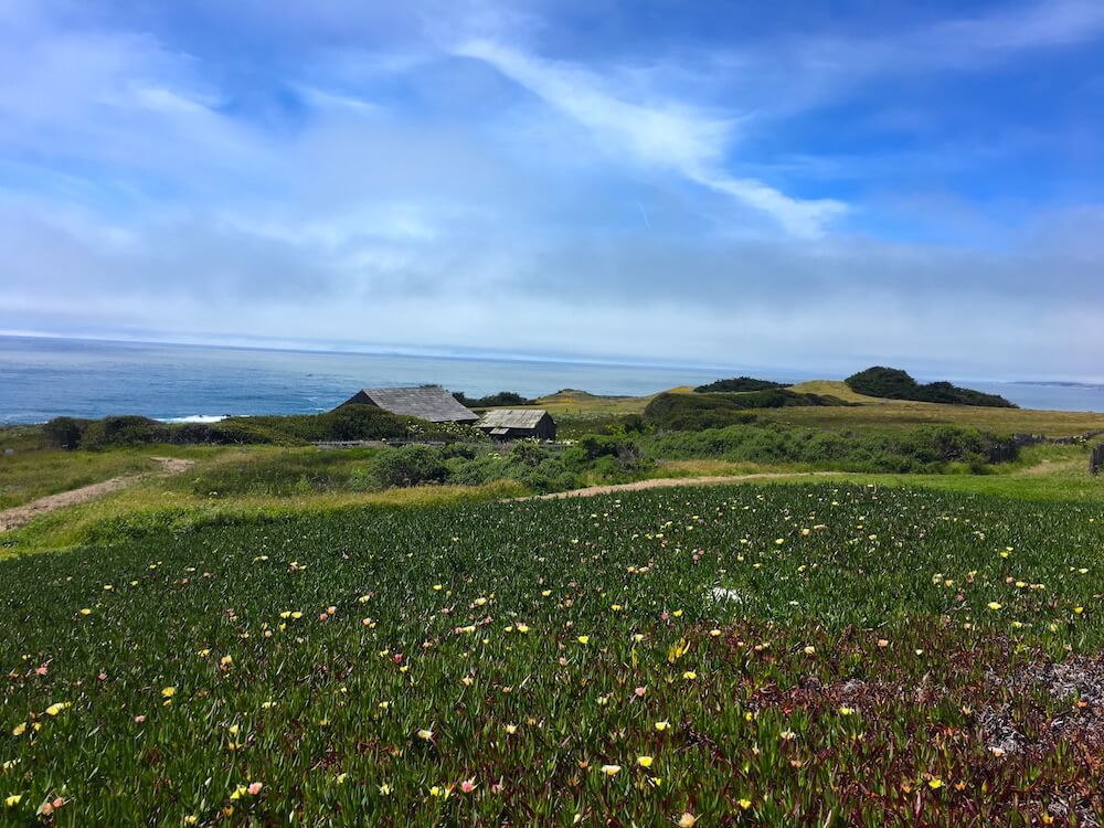 Sea Ranch wildflower views