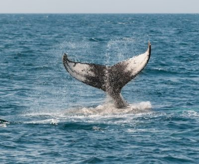 Whale Watching in Monterey California